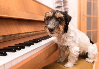 Pets and Piano Fun: 3 Ideas from Your Trusted California Piano Movers